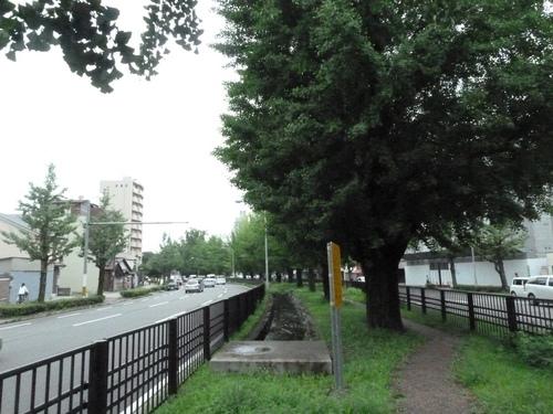 紫竹25.JPG
