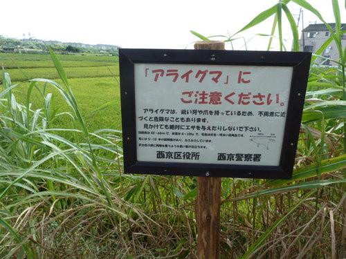 嵐山 きぬかけ3.JPG
