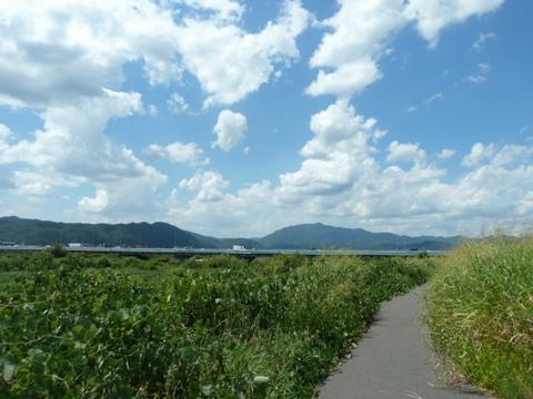 桂川サイクリングロード11.JPG