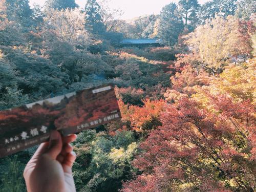 東福寺1.jpegのサムネール画像