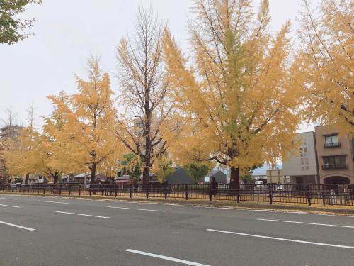 紫明通り1.jpg