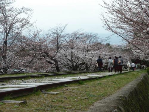 インクライン桜1.JPG