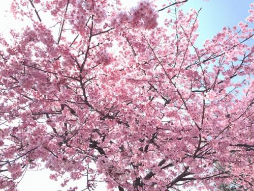 円山公園3月17日.jpg
