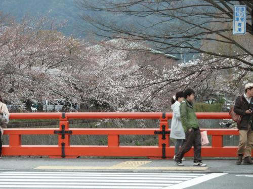 平安神宮桜.JPG