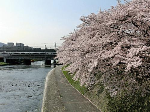 鴨川桜1.jpgのサムネール画像