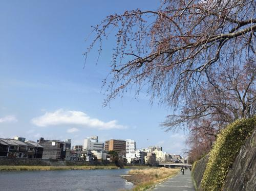 鴨川遊歩道3月17日1.jpg